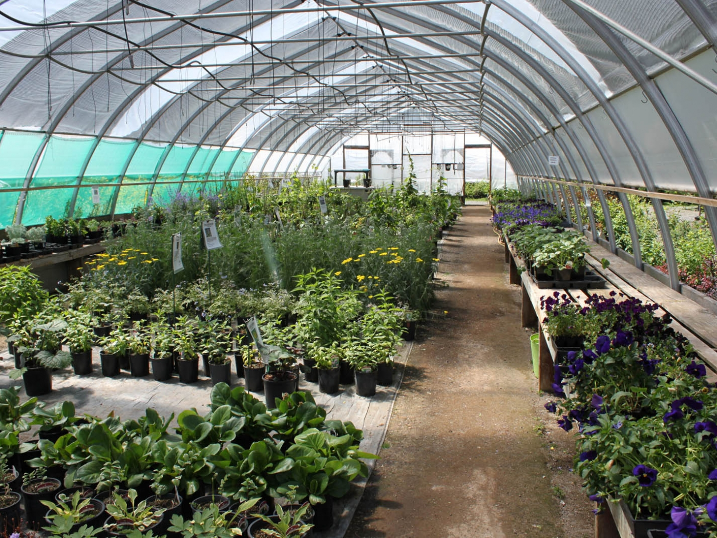 2019 APPRAISED AT OVER $1,210,000. In operation since 20 IO and is the largest greenhouse operation in the Cariboo is a business for sale in BC.